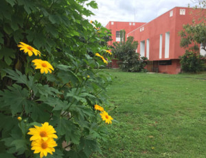 Garden-image4