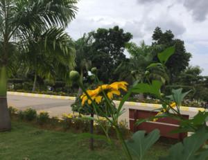 Garden-image8